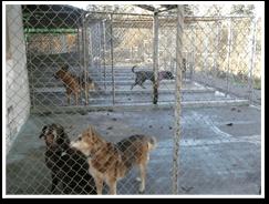 Dog Kennels. Seattle, WA