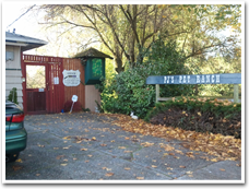 Dog and Cat Boarding Kennels Near Seattle's Seatac Airport